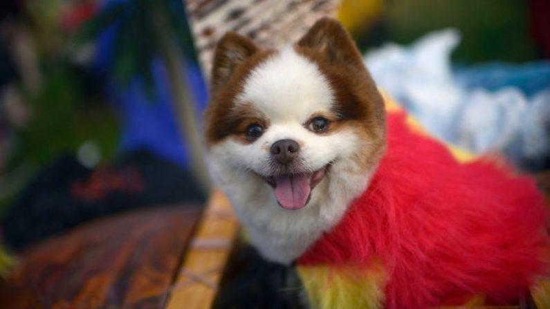 Imagen ilustrativa de un perro de familia. (Chelsea Guglielmino/Getty Images)