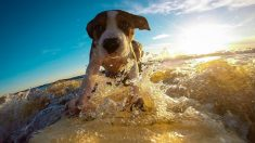 Perro parece estar perdido en el mar, pero mira lo que hace su amigo peludo para ayudarlo