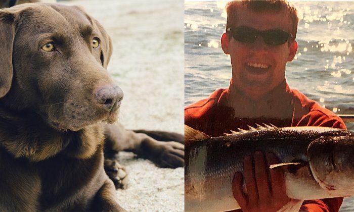 Perro similar a Java, un labrador asesinado por un caimán en Florida. (Jay Mantri/Pixabay); Una foto del propietario, Andrew Gabriel Epp. (Emily Rhoads/GoFundMe)