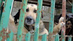 Aprobaron multas de hasta 1800 dólares para quien maltrate animales en la capital argentina