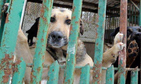 Perros en un refugio de animales. (Janek Skarzynski/AFP/Getty Images)