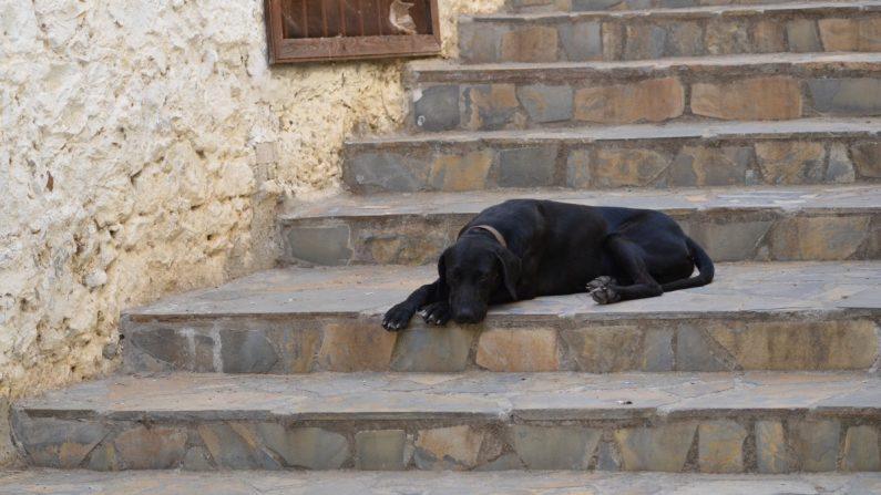 Imagen ilustrativa de un perro callejero. (Dominio público)
