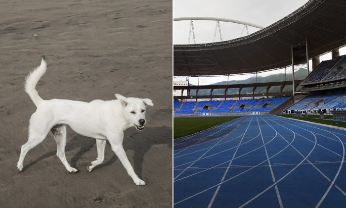 (Izq.) Un perro callejero similar al de la carrera. (Agung Parameswara/Getty Images)   (der.) Una pista vacía. (Spencer Platt/Getty Images)