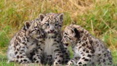 Perrita adopta a un cachorro de leopardo para salvarlo de ser devorado por su madre