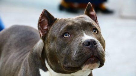 Perro de refugio no quiere soltar su tazón de comida ¡y así logra conquistar a su familia adoptiva!