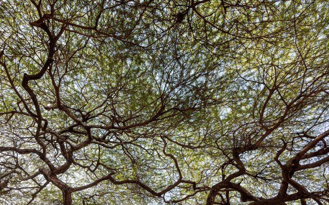 Foto ilustrativa de un árbol. (Shutterstock)