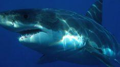 Mujer pesca un tiburón de 540 kilos y lo devuelve a su hábitat