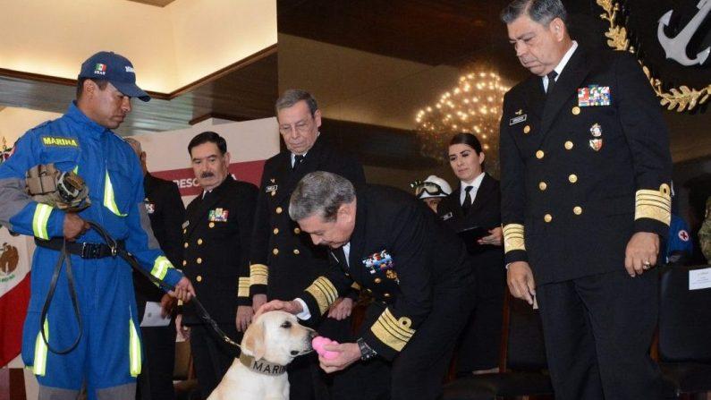 Frida, la perra rescatista, durante la ceremonia de jubilación (EFE)