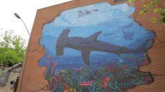 Tiburón martillo provoca la evacuación de toda una playa en Florida