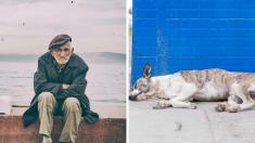 Anciano lleva a su perrito enfermo a un hospital de humanos y los médicos hacen algo increíble
