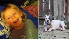 Niñita perdida 2 días en el bosque vuelve a casa sana y salva gracias a la protección de su pitbull