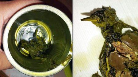 Mujer queda atónita al encontrar un pájaro muerto dentro de una lata de espinacas