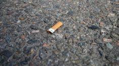Un ave alimenta a sus cría con una colilla de cigarrillo y la fotografía recorre las redes sociales