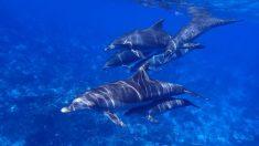 Perro se hace amigo de un delfín y todos los días se lanza al mar para jugar con él