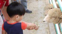 Niño de 2 años contrae una infección y muere luego de acariciar los animales de un zoológico