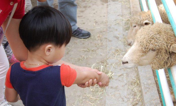 Imagen de archivo de un niño alimentando una oveja en un zoológico. (g4488 /Pixabay)