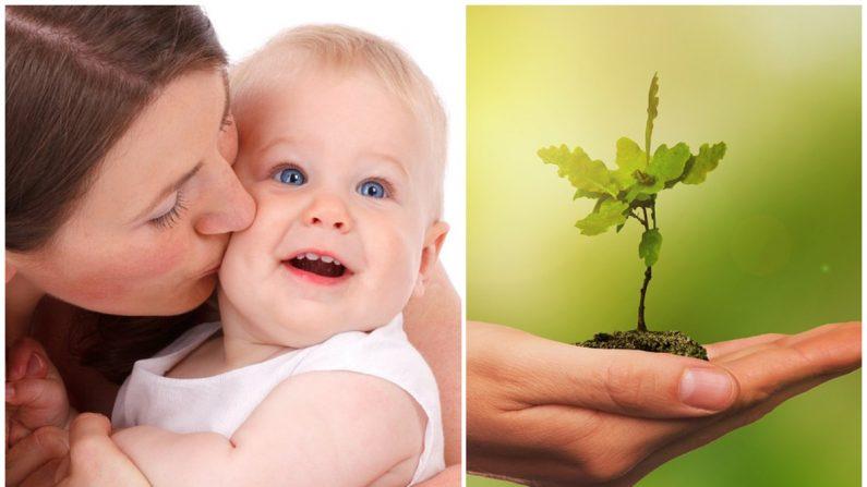 Las familias de Bruselas recibirán una tarjeta de un árbol plantado en África por el nacimiento de su bebé. Imagen ilustrativa. (Créditos: Pixabay/DPD y Nico Wall)