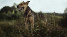 Un perro desentierra un hueso humano que podría pertenecer a una mujer desaparecida