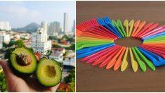 Talentoso mexicano inventa popotes y cubiertos de semilla de aguacate que se degradan en solo 8 meses