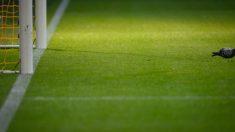 Una paloma se entromete en el partido de Copa América y se salva de milagro (video)