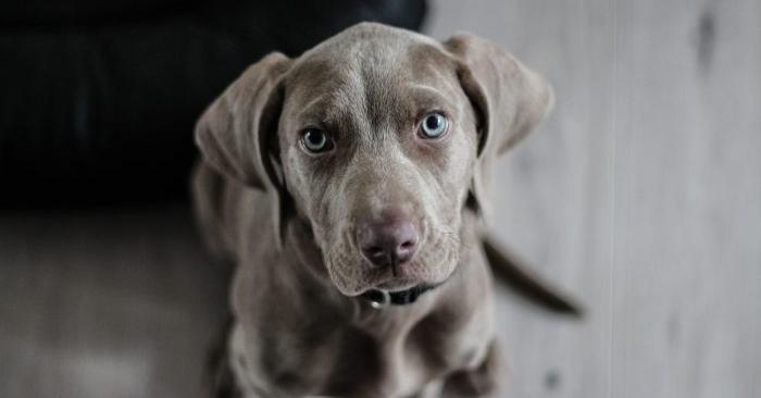 Foto de archivo de un perro. (Pixabay/CC0)