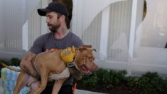 Amputaron una pierna a un ladrón atacado por dos pitbulls por entrar a una casa en Argentina