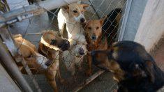 """Cuba: Estafan a familia al venderles carne de perro como """"carnero"""""""