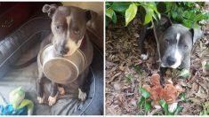 Perro rescatado y hambriento no puede dejar su plato de alimento y se niega a ser adoptado sin él
