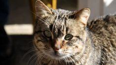 Gatito en Brasil se escapa de la casa para ir al velorio de su dueña