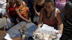 El colmo del comunismo cubano: vivir en una isla con escasez de pescados