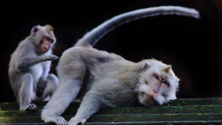 Mono arruinó la foto ideal de vacaciones de una familia e incluso les dedicó un insulto