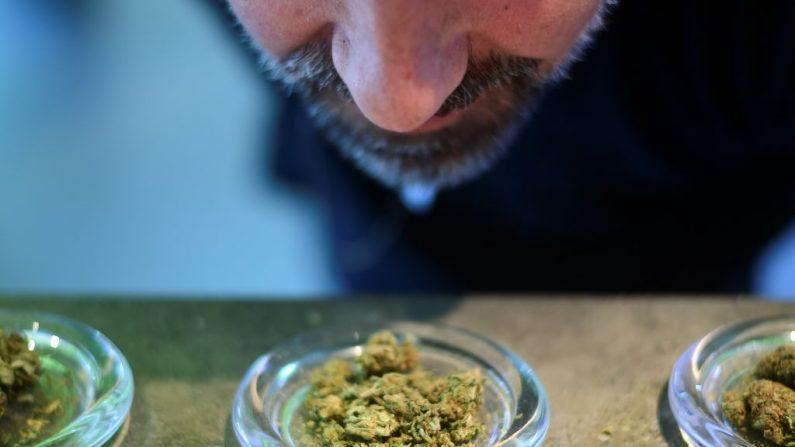 """Una fotografía tomada el 5 de junio de 2019 muestra a un hombre que huele una muestra de brotes de marihuana, a menudo simplemente llamada hierba o maceta, que es la forma no procesada de la planta de cannabis hembra, en la tienda """"Hemp Embassy"""" en Milán, una de las primeras Tiendas en Italia dedicadas al cannabis. - Es """"legal"""" si la sustancia psicotrópica de riesgo, el THC está bloqueada, pero puede usarse para textiles, alimentos, cosméticos y otros fines. (MIGUEL MEDINA / AFP / Getty Images)"""