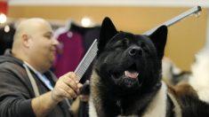 Niña de 7 años necesita 1000 puntos de sutura en la cara después del ataque de un perro Akita