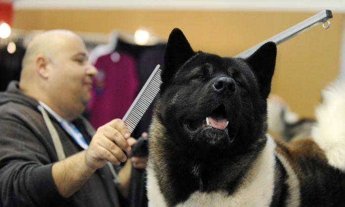 Imagen de archivo de un perro Akita. (Attila Kisbenedek/AFP/Getty Images)