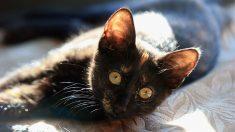 Muere Dulcinea, la gata de dos meses a la que explotaron un petardo en la boca