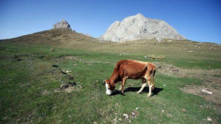 """""""Chupacabras"""" dejan vacas mutiladas en Bordenave y otras regiones de Argentina"""