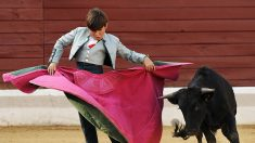 Polémica por participación de niños en corridas de toros en España donde cortan orejas a becerros vivos