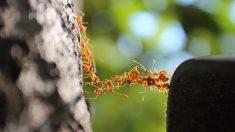 Hormigas invaden vuelo de United Airlines de Italia a Estados Unidos y una pasajera relata la experiencia