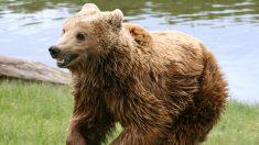 """""""No puede ser"""" el vídeo del hombre que sobrevive a un oso un mes después que lo llevó a su guarida"""