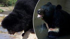 Cachorro que adopta hace dos años se convierte en un gran oso
