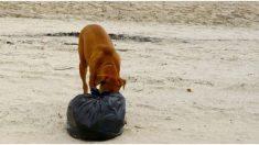 Perro llega con una bolsa de basura a casa, al ver lo que hay dentro se apresuran a ir al hospital