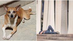Perro protege a su dueño que se desmaya en plena calle y no permite que nadie se le acerque