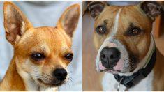 Foto de perros de un refugio cuya amistad es tan fuerte que nadie los puede separar, se vuelve viral