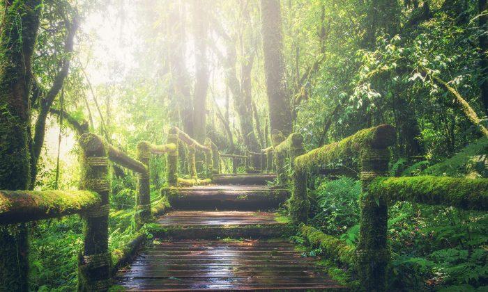 """El filósofo de la antigua china Laozi dijo una vez: """"Un gran árbol—tan ancho que hace falta dos hombres para abrazarlo—comenzó como un pequeño retoño. Una pagoda de nueve pisos comenzó como una pila de tierra en su cimiento. Un viaje de miles de millas comenzó con un paso"""". (Pixabay)"""