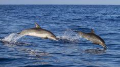 Delfines rescatan a un perro agotado que se ahogaba en un canal de la manera más increíble