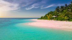 Descubren a una extraña criatura tomando sol en una playa australiana