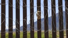 México: detienen a casi 800 inmigrantes ilegales en 4 camiones