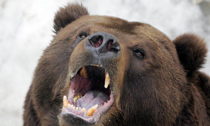 """Cazadores encuentran a un hombre vivo atacado por un oso y guardado como comida: """"parecía una momia"""""""