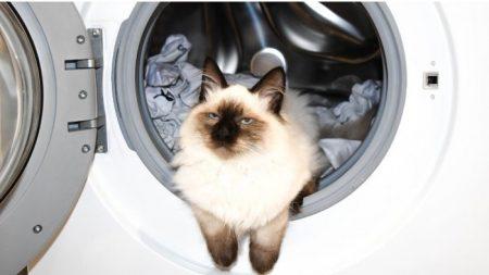 Gato afortunado sobrevive a un ciclo completo del lavarropas