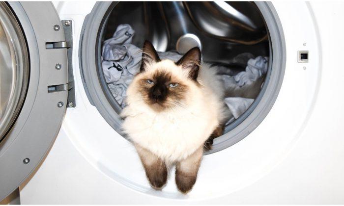 Foto ilustrativa de un gato descansando en un lavarropas. (Pixabay)